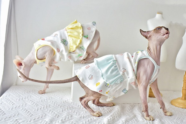 Can be customized(cat in clothes)