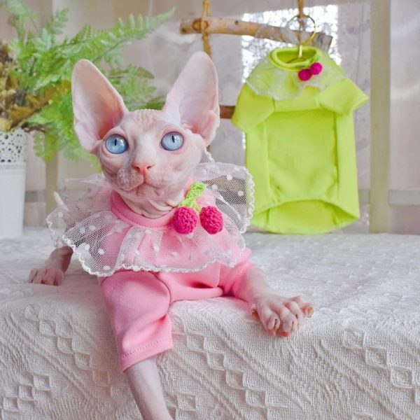 Cat Collar Shirts for Sphynx Cat   Candy colored strawberry lace T-shirts