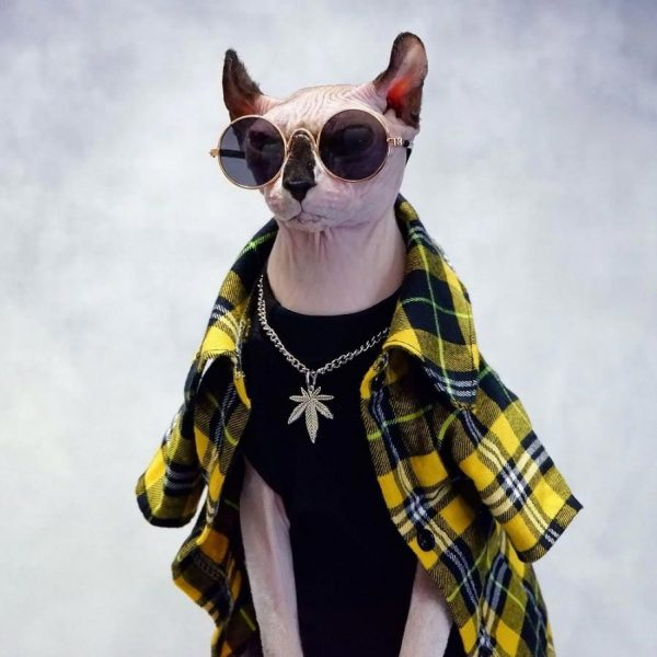 Sphynx Coat & Jacket for Hairless Cat | Cool Plaid jacket suit yellow
