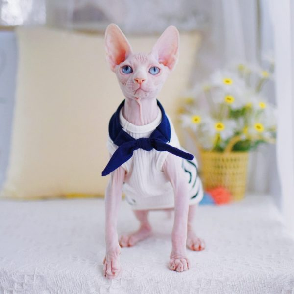 Cat Tank Tops for Sphynx Cats & Hairless Cats | Halter sailor suit