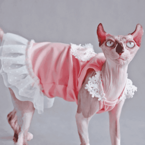 """A """"Must-Have"""" Daily cat dress."""