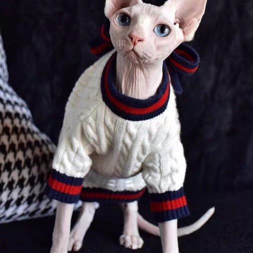 """A""""Must-Have"""" Daily cat winter coat."""