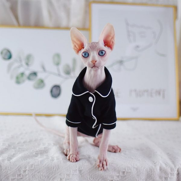 """A """"Must-Have"""" Daily pajamas for cats"""