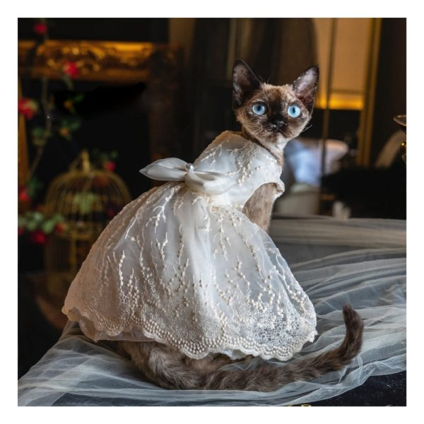 Sphynx With Wedding Dress I Do, Too! Luxurious Wedding Oufit For Cats