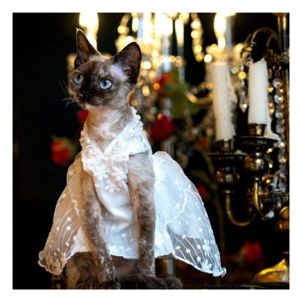 Sphynx Wedding Dress I Do, Too! Cute Luxurious Wedding Oufit For Cats