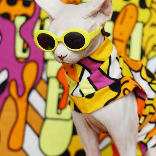"""Ins Clothes For Hairless 