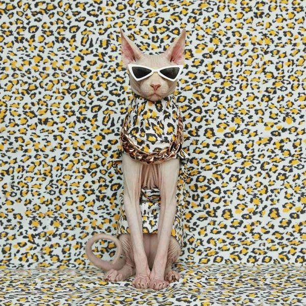 Sphynx Cat Cool Clothes | Cat Clothes, Cat Apparel, Leopard, Pure cotton