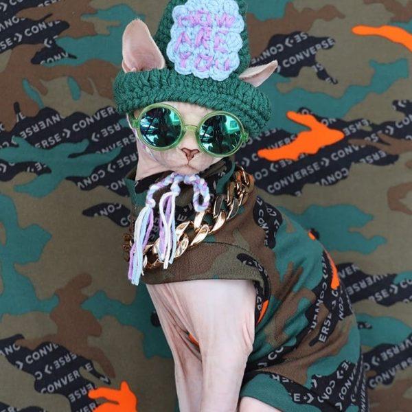 Sphynx Cat Halloween Costumes | Cat Halloween Costume, Cat Clothes Cat Cool Apparel