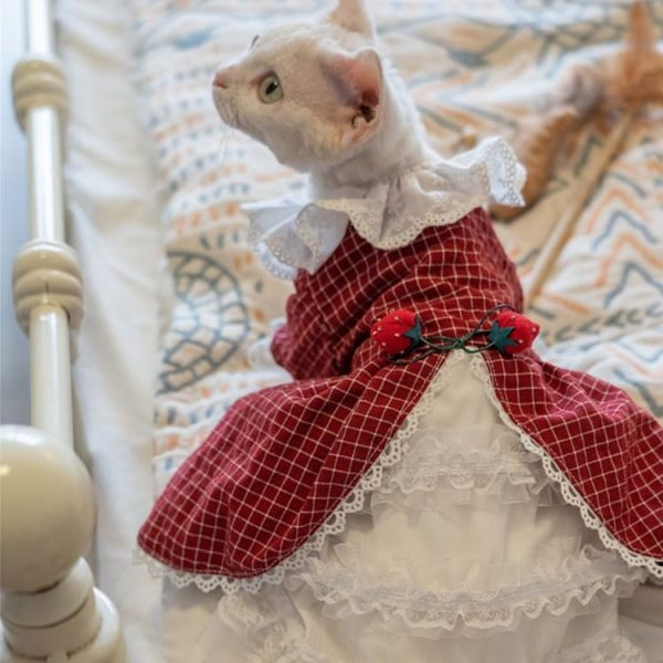 Sphynx Princess Dress | Cat Luxury Dress, Cat Cute Outfit, Wedding dress