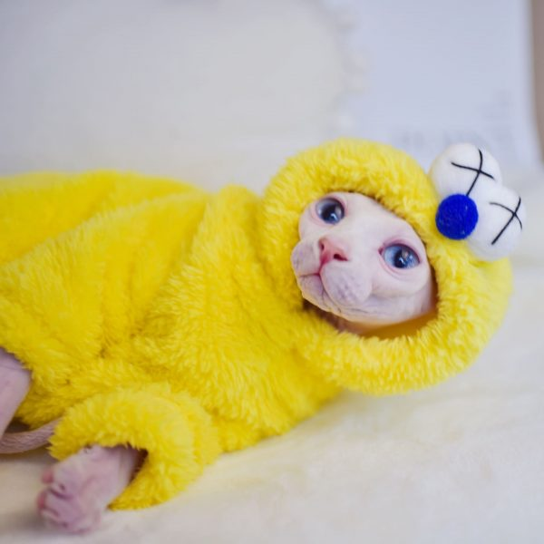 Cute Cat In Winter Coat | Cat Apparel, Double Sided Lamb Cashmere