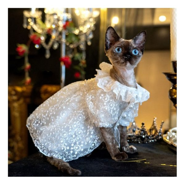 Wedding Dress For Cat I Do, Too! Cute Luxurious Wedding Oufit For Cats