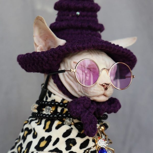 """A """"Must-have"""" Halloween Costume for cats"""