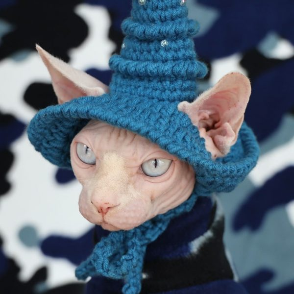 """A """"Must-Have"""" cat halloween costumes for cats"""