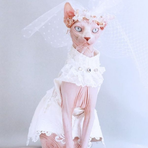 Cat Wedding Dress | I Do, Too! Cute Luxurious Wedding Oufit For Cats