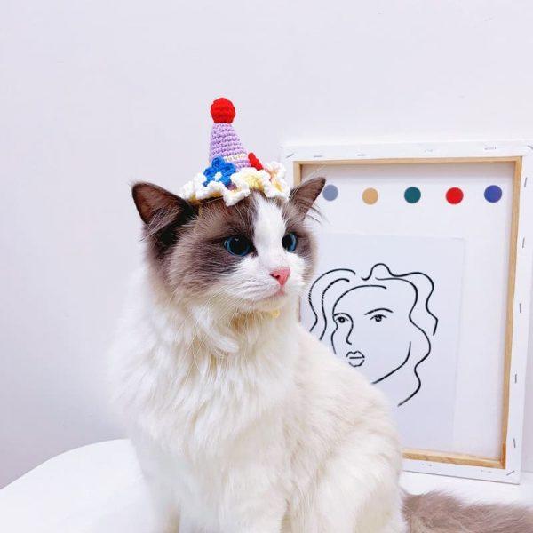 Cat Birthday Hats | Cat with A Birthday Hat, Birthday Cake Hat, Cat Apparel