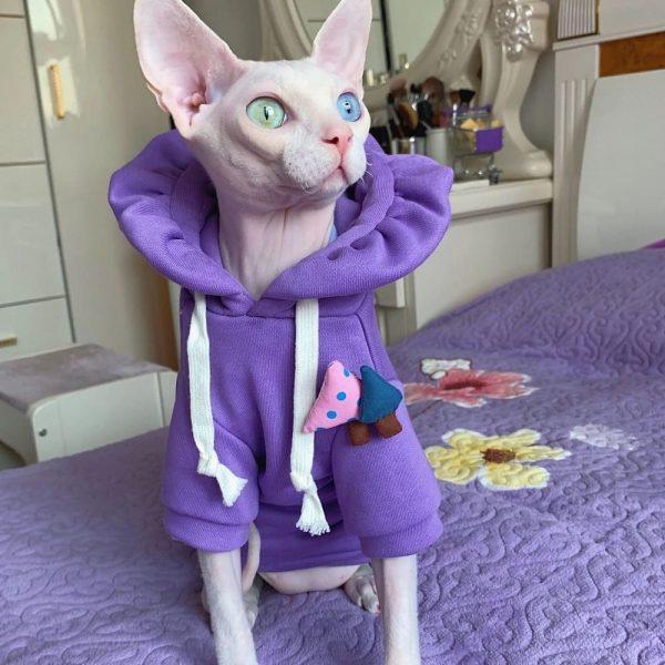 Cat Sweatshirt | Kitten Sweatshirt, Cat in sweatshirt, Hoodie for cats