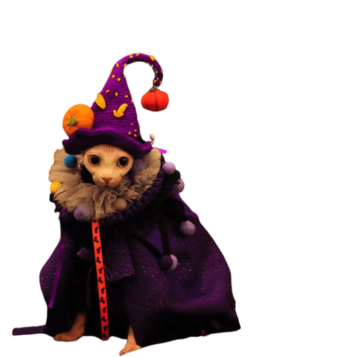 Halloween Harry Potter Outfits Cat In clothes, Halloween Costumes