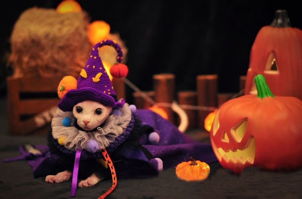 Halloween Harry Potter Outfits | Cat In clothes, Halloween Costumes