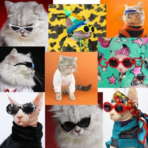 Cat Glasses   Cat Apparel, Cat Funny Accessories, High-Quality