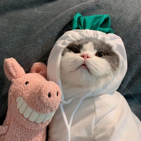 Cat Hoodie for Cat | Kitten Sweatshirt, Cat in sweatshirt, Hoodies for cats