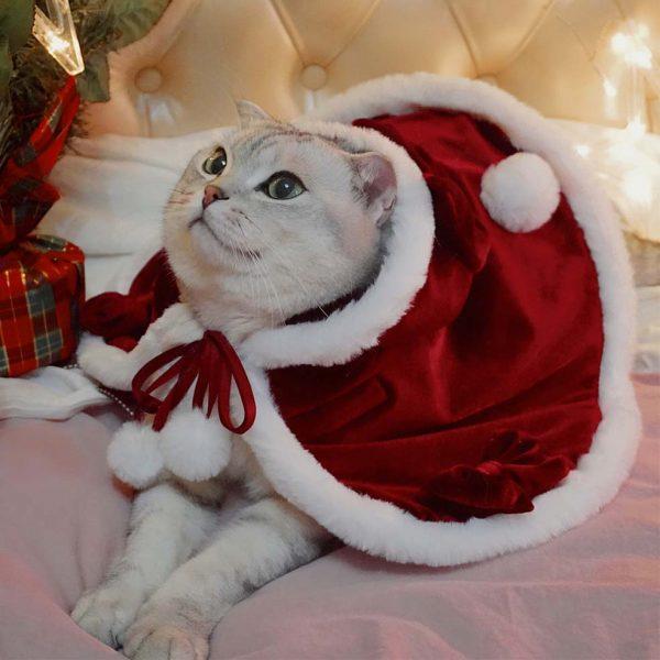 Cat with Christmas Cloak | Lolita Cape Cloak, Cat Christmas Outfit