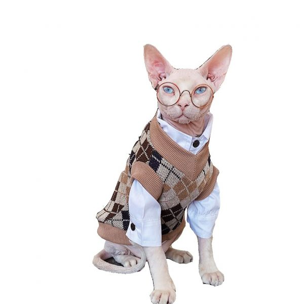 College Style Cat Sweater | Sphynx Cat Sweater, Hairless Cat in Sweater