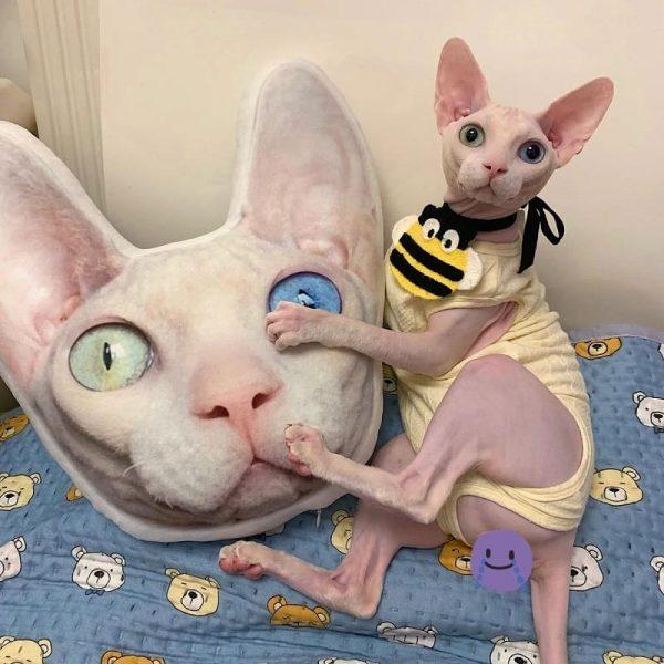 Custom Pet Photo Pillow, Personalized Pet Image Pillow Shape (4)