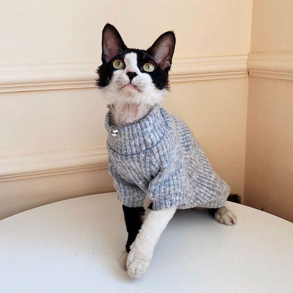 Hairless Cat in Turtleneck | Sphynx Cat Sweater, Turtleneck Sweater