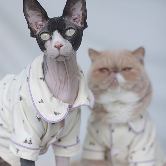 Pajamas for Cats   Cute Pet Clothes, Cat Apparel, Cute Cat with Clothes