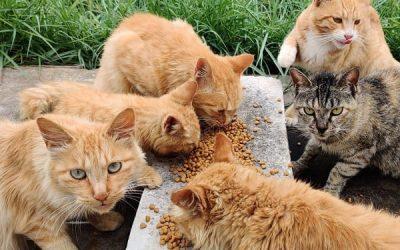 Save stray cat